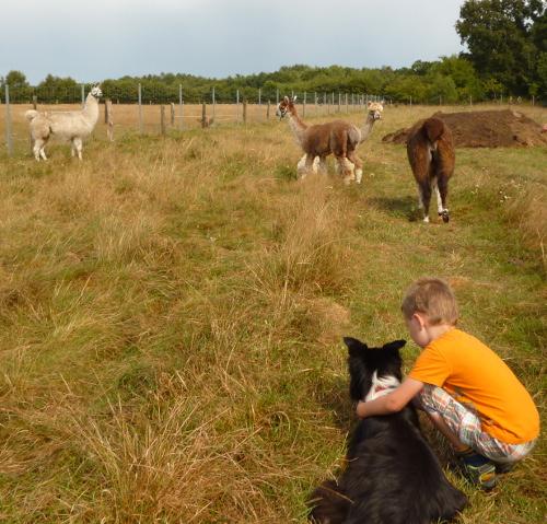Hund, Kind, Lamas und Alpakas
